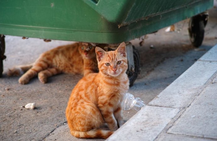 Gatti: il rapporto tra gli animali e la salute dei condomini alla luce di una ordinanza del Comune di Formia