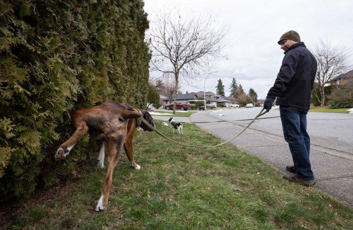 Animali in condominio. Tempi duri per i proprietari dei cani. Nuovi strumenti contro gli incivili di imbrattamento degli spazi pubblici e condominiali
