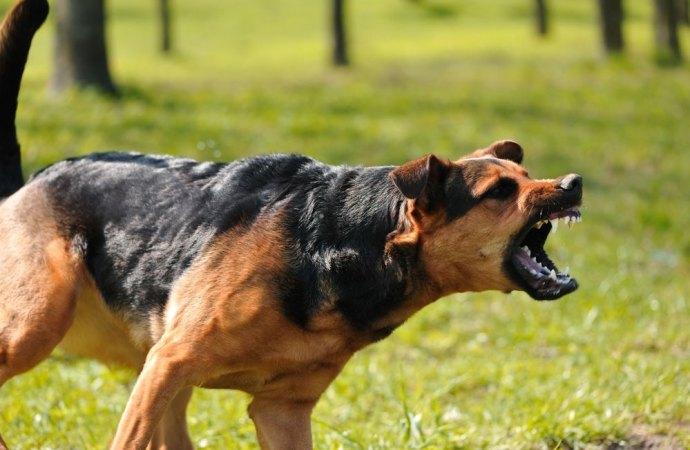 Non si può urlare di notte contro i cani dei vicini per farli tacere