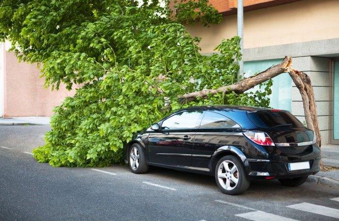 Burrasca, caduta di un albero e responsabilità del proprietario
