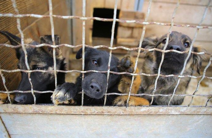 29 cani in una abitazione. Legittimo il sequestro amministrativo in caso di pessime condizioni igieniche