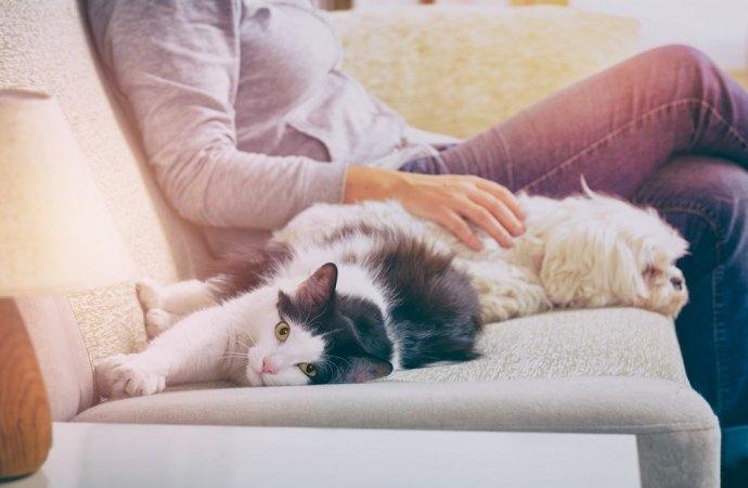 Quanti animali è possibile tenere in un appartamento condominiale?