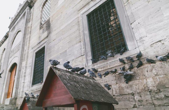 Nutre i piccioni, la vicina si ammala. Condannata e costretta a lasciare casa.
