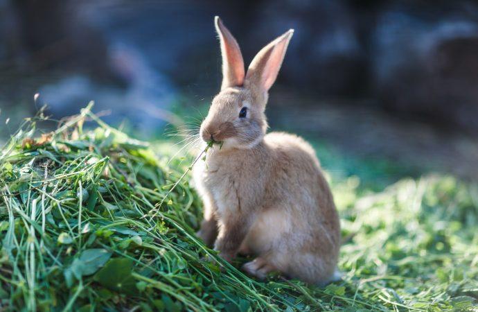 Animali in condominio: i conigli possono ritenersi animali domestici?