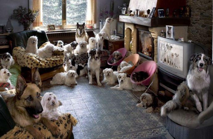 22 cani in casa. Proprietaria condannata per disturbo della quiete pubblica