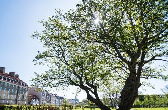 Danni causati da un albero di grandi dimensioni: responsabile il condominio