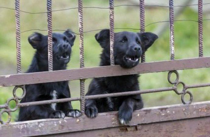 Il limite di tollerabilità dell'uomo e il diritto di abbaiare del cane