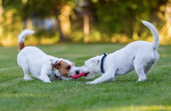 Cani in giardino. Solo il proprietario dell'animale risponde dei danni