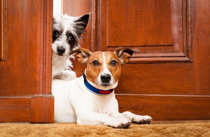 Cani in condominio e regolamento contrattuale, lo stato dell'arte