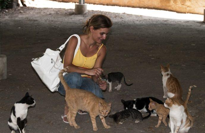 Il sequestro dei gatti non proibisce alla gattara di detenere animali anche se indagata