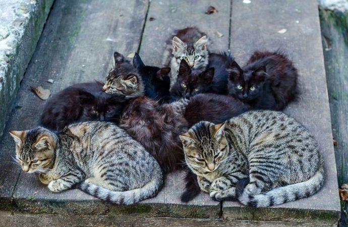 Gattari e colonie feline in condominio. Ecco le regole da seguire