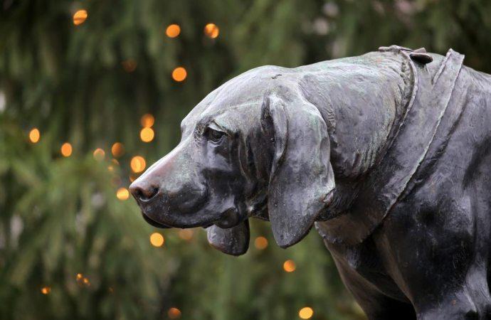 La sepoltura di un animale domestico nel giardino condominiale: quali limiti?