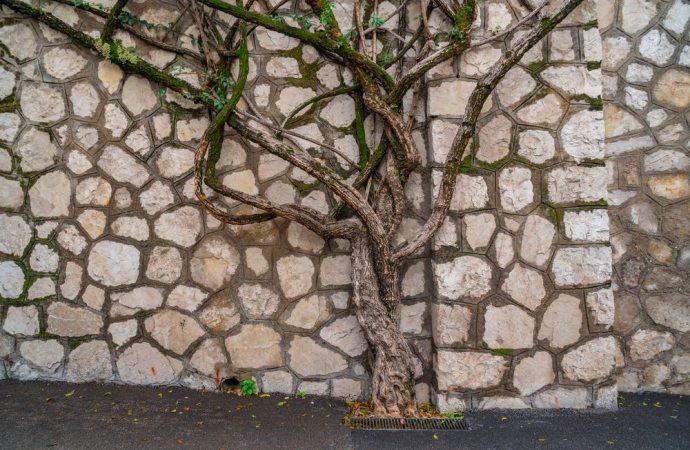 Radici degli alberi nel terreno altrui, come comportarsi