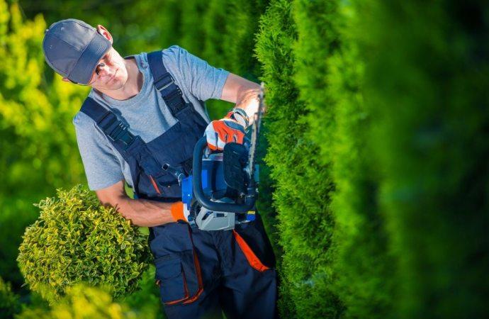 Recisione radici alberi e piante cosa fare
