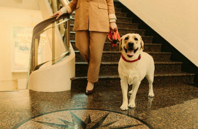 Deiezioni canine, scivoloni e danni