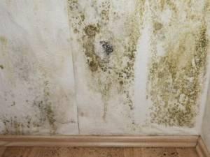 Muffa al soffitto come intervenire - Umidita giusta in casa ...