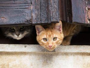 Cani e gatti danneggiano le parti comuni condominiali for Allontanare i gatti